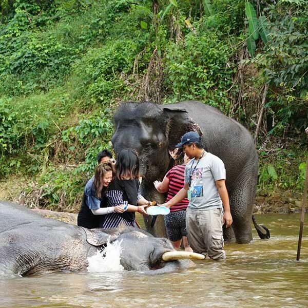 F.-Day-Trip-Rafting-Flying-Fox-Elephant-Trekking-Bathing-ATV