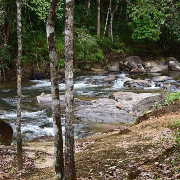 rain-forest-waterfall-phang-nga-2