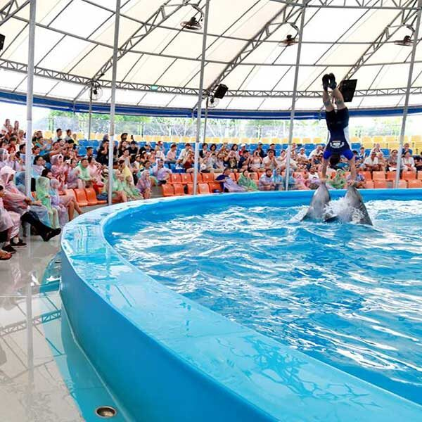 Dolphins-Show-Ticket-at-Nemo-Dolphins-Bay-Phuket-3