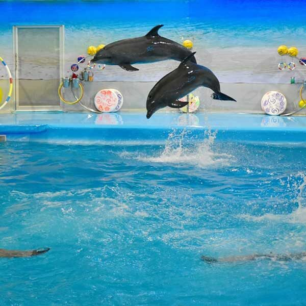 Dolphins-Show-Ticket-at-Nemo-Dolphins-Bay-Phuket-4