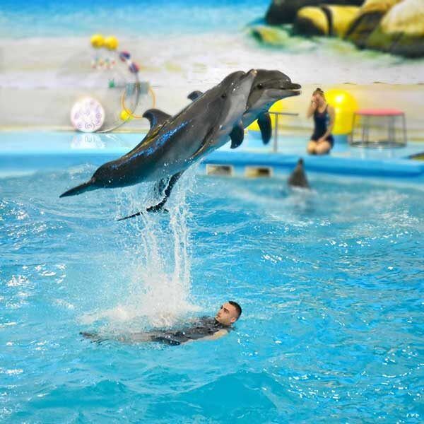 Dolphins-Show-Ticket-at-Nemo-Dolphins-Bay-Phuket-6