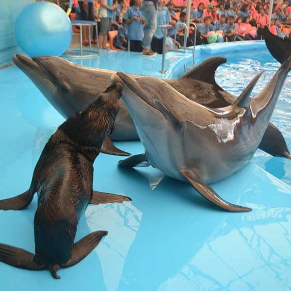 Dolphins-Show-Ticket-at-Nemo-Dolphins-Bay-Phuket