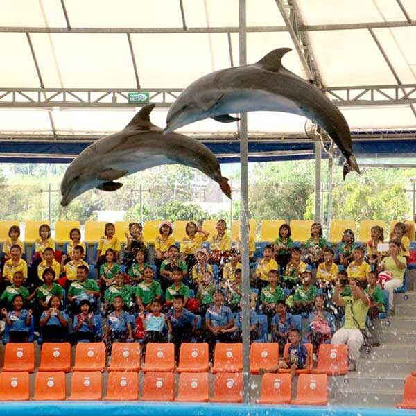 Dolphins-Show-Ticket-at-Nemo-Dolphins-Bay-Phuket-7