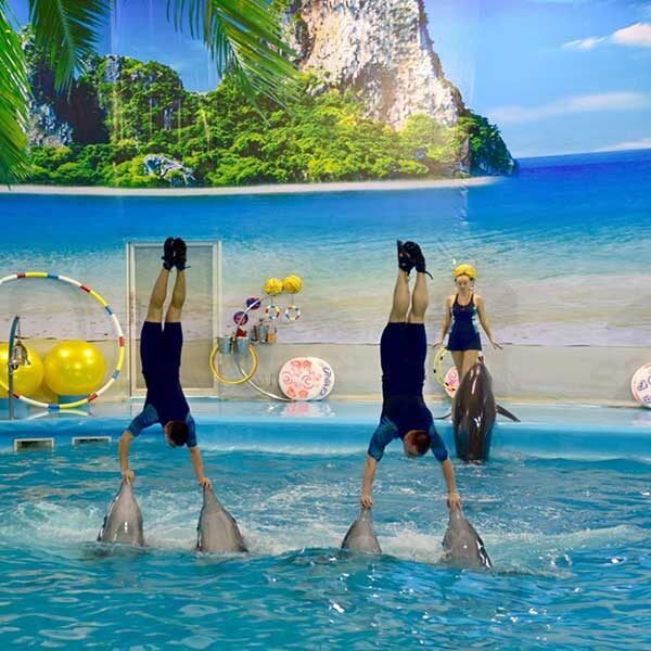 Dolphins-Show-Ticket-at-Nemo-Dolphins-Bay-Phuket-8