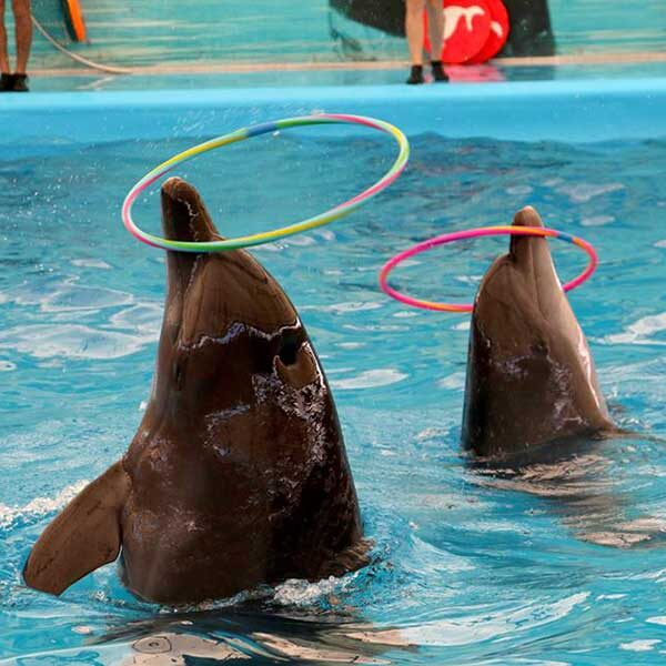 Dolphins-Show-Ticket-at-Nemo-Dolphins-Bay-Phuket-9