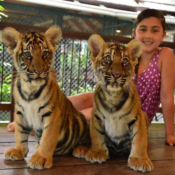 Smallest-Tiger-Kingdom-Phuket-2