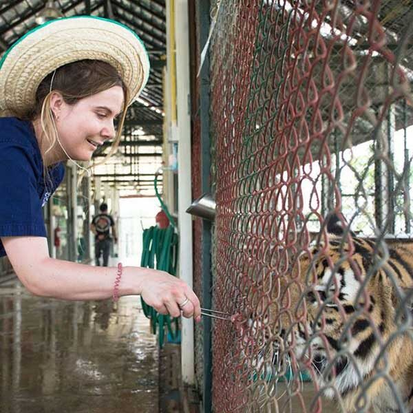 Tiger-Kingdom-Learning-Center-Chiang-Mai-5