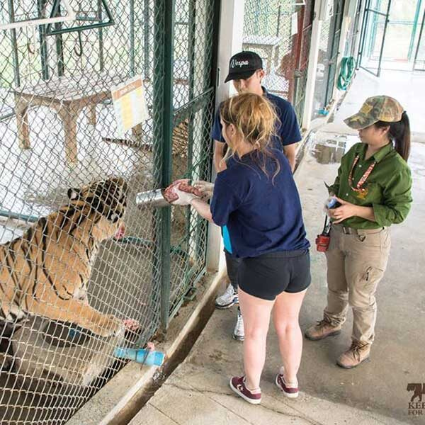one-day-experience-take-care-tiger-chiang-mai