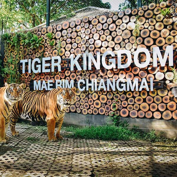 tiger-kingdom-mae-rim-chiang-mai-zoo