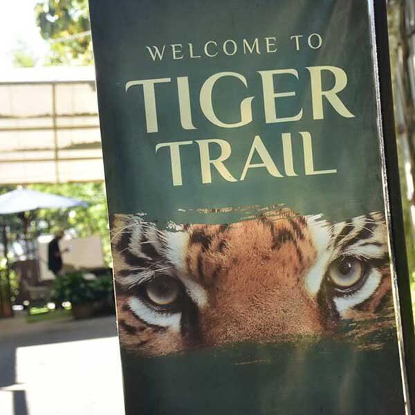 tiger-trail-care-experience-mae-rim-chiang-mai-3
