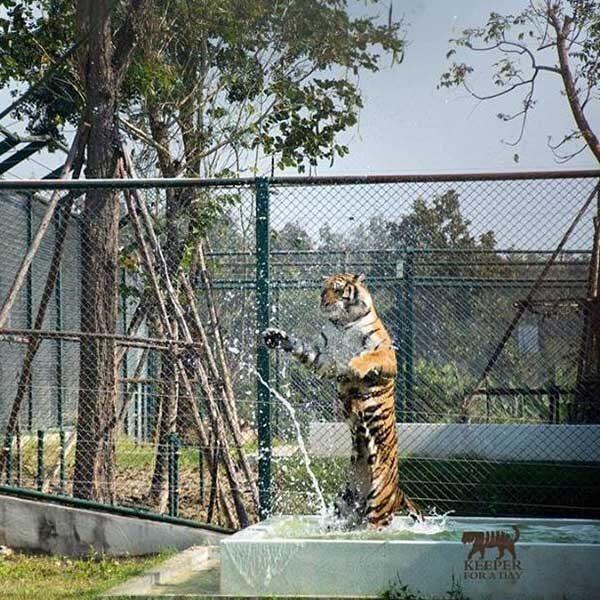 tiger-trail-care-experience-mae-rim-chiang-mai-5