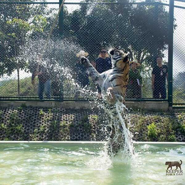 tiger-trail-care-experience-mae-rim-chiang-mai-6