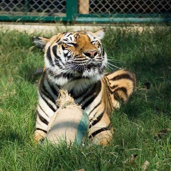 tiger-trail-care-experience-mae-rim-chiang-mai-7