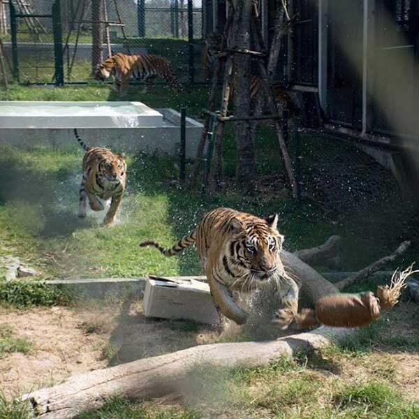 tiger-trail-care-experience-mae-rim-chiang-mai-8