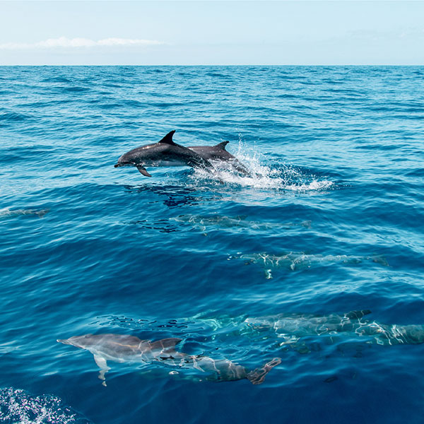 luxury-yacht-tour-phuket-see-dolphint-maiton-island