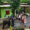 samui-safari-tour-elephant-show-4×4-offroad
